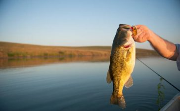 How to Catch Bass in the Fall